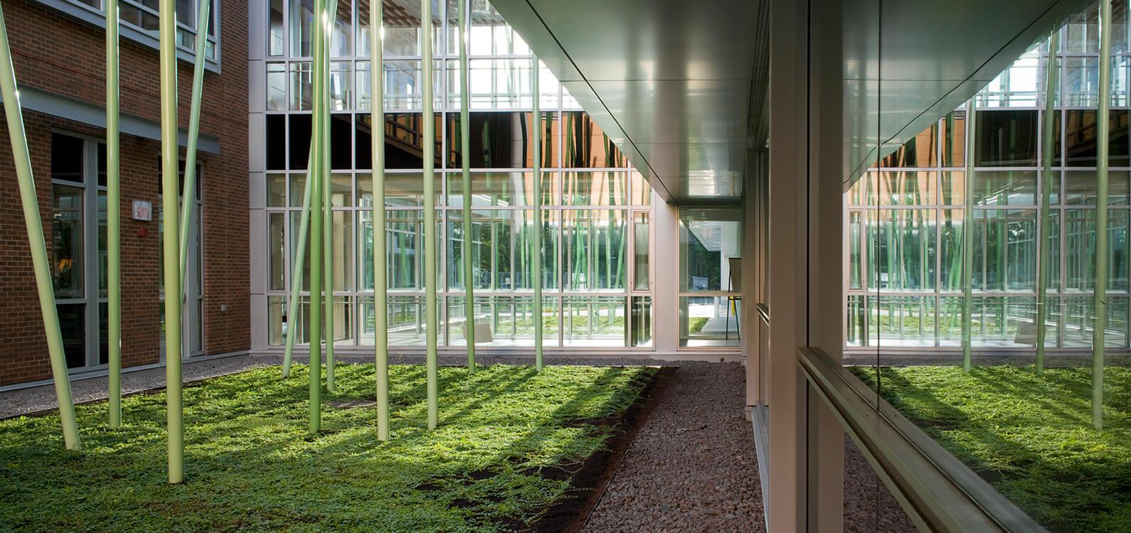 Jardin / Forêt